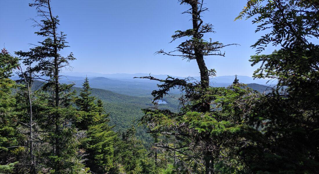 Pine trees on mountain top